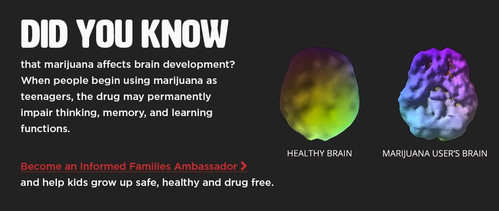 marijuana_brain_2019